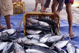 Ada Pasar Laut Indonesia, Teten: UMKM Perikanan Bakal Sejahtera