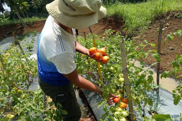 Ayo Anak Muda, Peluang Bisnis Sektor Pertanian Terbuka Lebar