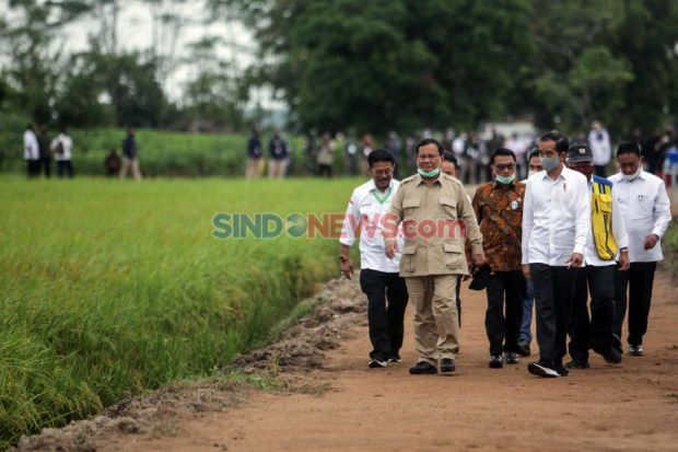 Selain Sumut dan Kalteng, 3 Provinsi ini Dilirik Jadi Lumbung Pangan Nasional