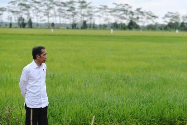 Prittt, Perhatian! Awal Oktober Jokowi Bakal Kick Off Food Estate
