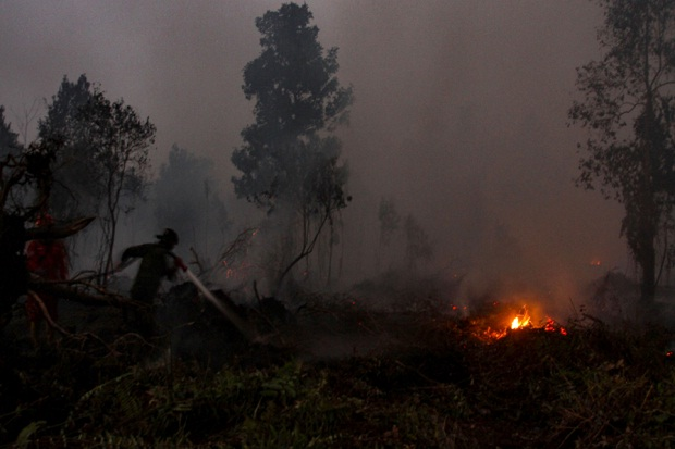 Greenpeace: Luas Karhutla Gambut 8 Kali Pulau Bali dalam 5 Tahun