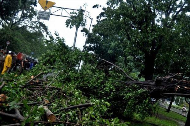 BPBD Maros Lakukan Pemangkasan untuk Antisipasi Pohon Tumbang