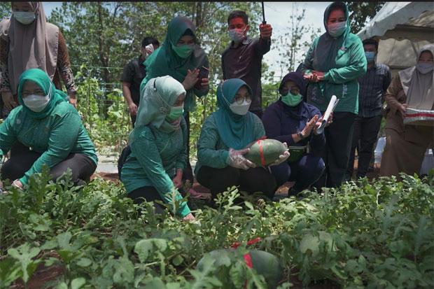Lies F Nurdin Panen Raya Pangan di Eduwisata Hortikultura Sudiang