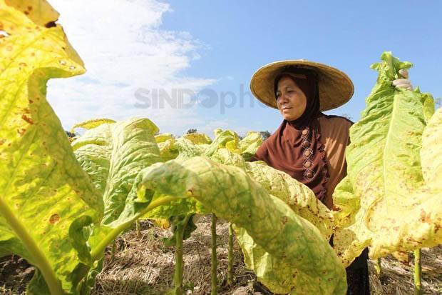 Jadi Beban Petani hingga Industri, PKB Tolak Kenaikan Cukai Rokok