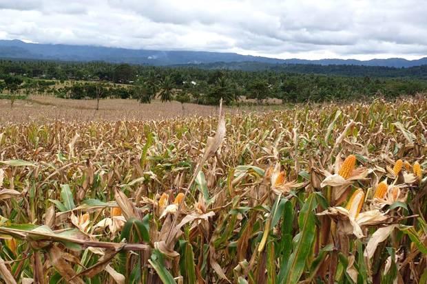 Pertumbuhan Pertanian NTB Perlu Ditingkatkan, DPR: Butuh Waduk