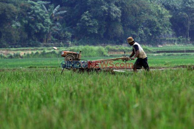 Sentrafarm Jadi Solusi Teknologi Pertanian Masa Depan