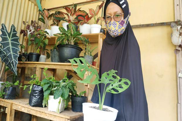 Janda Bolong Jadi Berkah Bagi Penjual Bunga Saat Pandemi