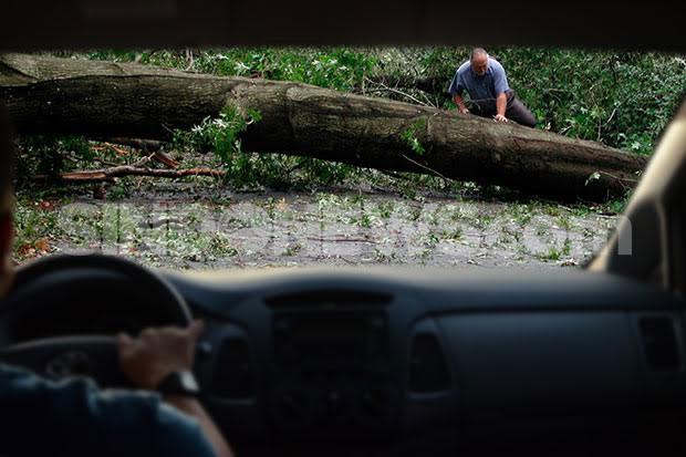 Dewan Minta Pohon Tua Berpotensi Tumbang Segera Dipangkas