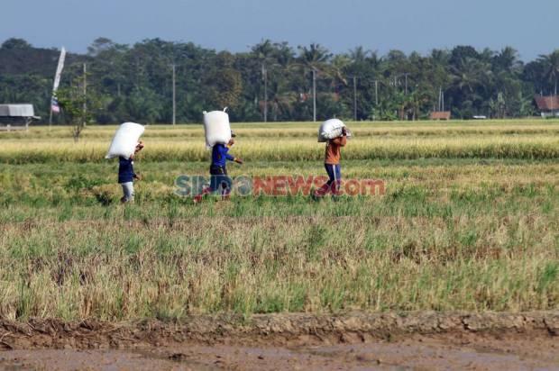 RI Terancam Kelaparan, Ekonom: No Way!