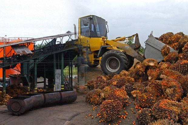 Produksi Minyak Sawit Bakal Moncer, Tapi Permintaan Masih Dibayangi Covid-19