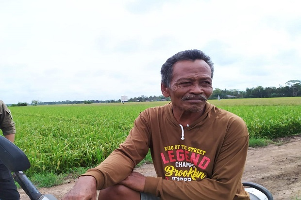 Warji: Ikuti Panduan Tanam, Panen di Food Estate Kalteng Memuaskan
