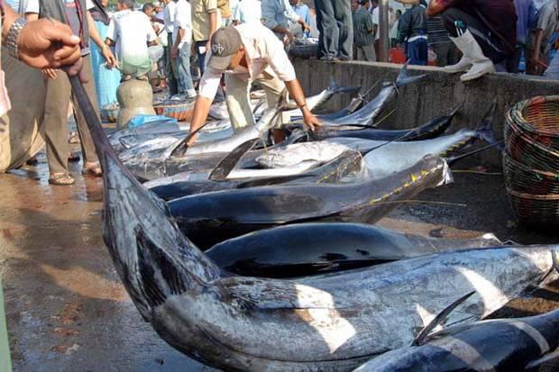 Jadi Sumber Ikan Tuna Terbesar di Dunia, Indonesia Gercep Daftar ke PBB