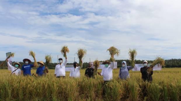 Gelar Panen Raya, Produksi Padi Intani dan TaniHub Meningkat 30%