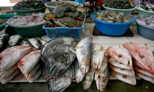 Dapat Lampu Hijau Jokowi, Lumbung Ikan Nasional Segera Dimulai