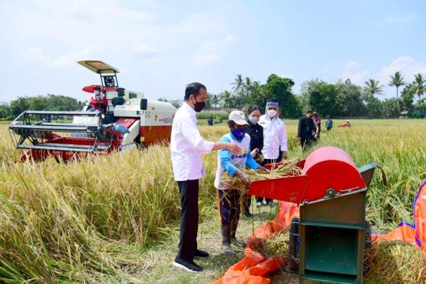 Presiden Jokowi Bahagia Menyaksikan Hasil Panen Melimpah