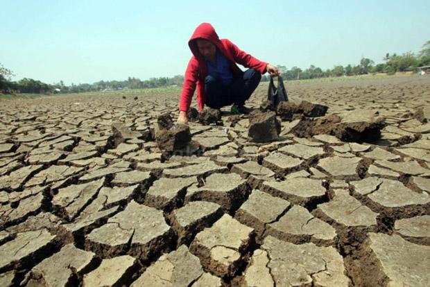 BMKG: 9,94% Wilayah Indonesia Sudah Memasuki Musim Kemarau