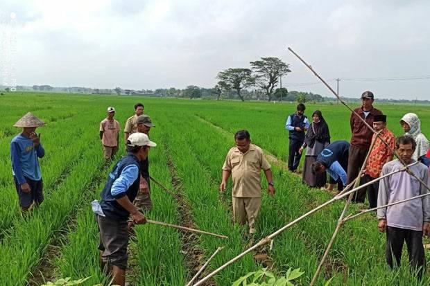 Lewat Sekolah Lapang, Petani Purworejo Terapkan Pertanian Cerdas Iklim