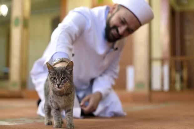 Kisah Syekh Abu Bakar As-Syibli dan Kucing Pembawa Rahmat
