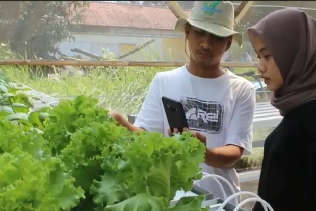 Petani Milenial Indramayu Kembangkan Sistem Pertanian Berbasis Android