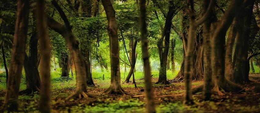 Sejarah Hutan Kota di Jakarta, Dibuat untuk Bikin Senang Tamu Asing