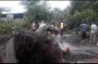 Belasan Pohon Tumbang Akibat Angin Kencang, 2 Mobil dan 1 Motor Rusak Parah