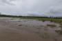 Puluhan Hektar Tanaman Tersapu Banjir, Petani di Halmahera Utara Merugi