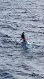 Kapal Tenggelam, Stuart Bee Bergantung Selama Dua Hari di Hidung Kapal